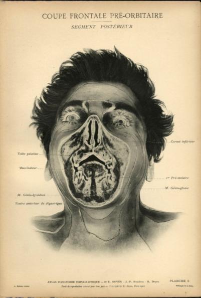 human head front profile